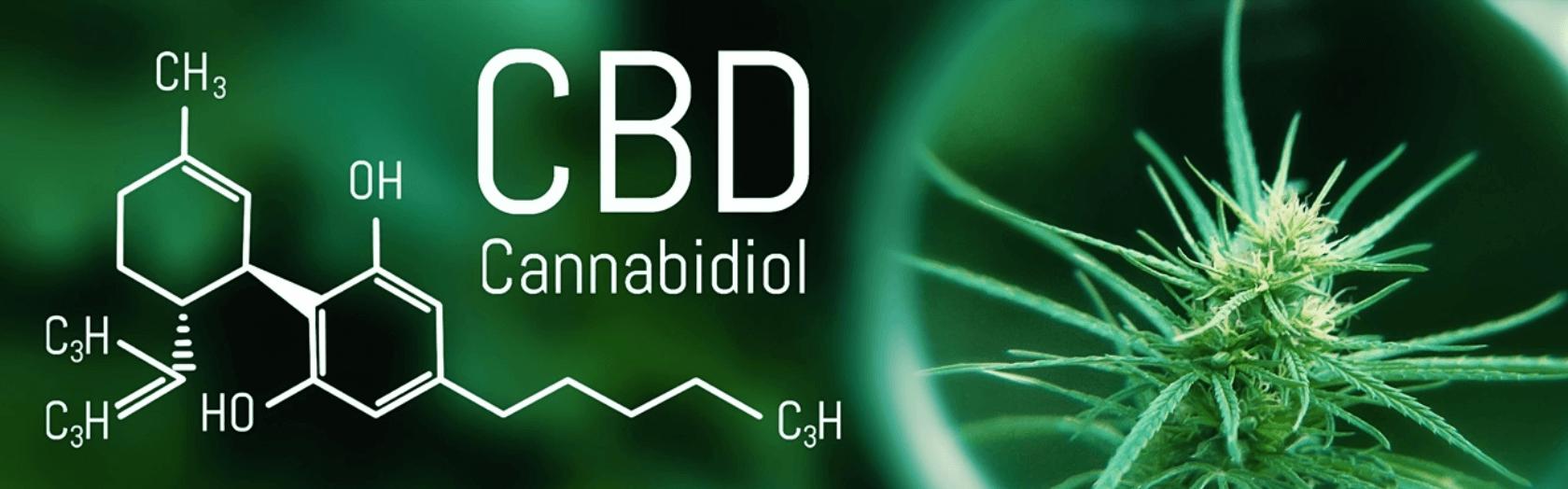 CBD – Właściwości, działanie i dawkowanie kannabidiolu